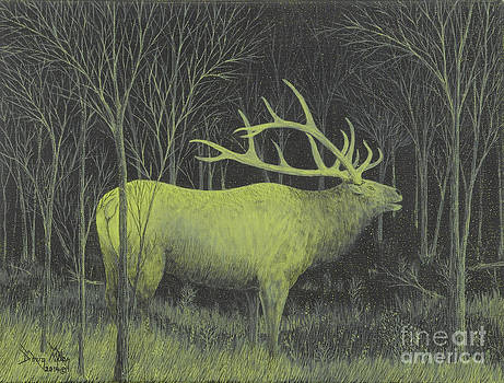 My First Elk by Doug Miller
