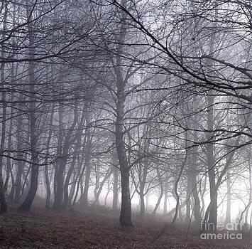 BERNARD JAUBERT - Mystery forest