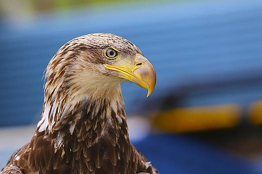 Mystic Eagle 3 by Jack Molan