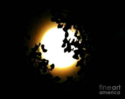 Gail Matthews - Mystical Super Moon Silhouette