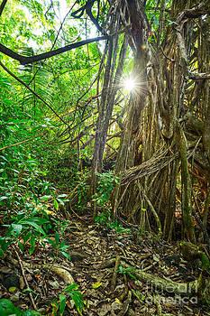 Jamie Pham - Nahiku Jungle