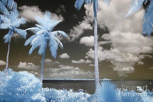 Nail Bay Infrared by Jared Shomo
