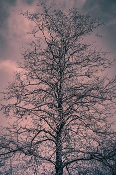 Naked by Matti Ollikainen