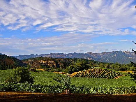 Napa Valley Pride Mountain Vineyard by Jennifer Lamanca Kaufman