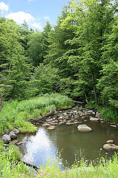Natural Creek Landscape by Suzi Nelson