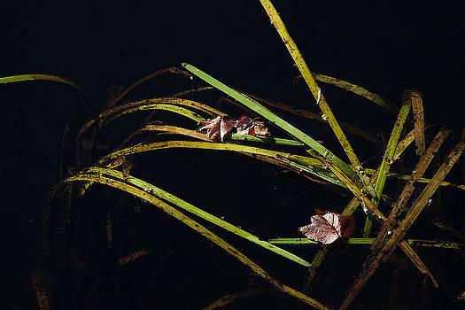 Karol Livote - Nature Floats