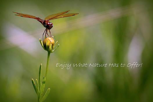Rosanne Jordan - Nature Greeting