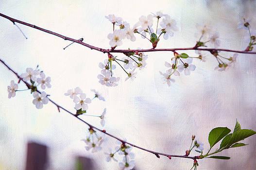 Jenny Rainbow - Nature Innocence