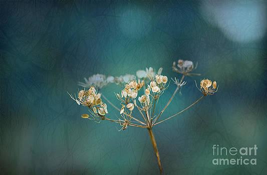 Liz  Alderdice - Nature is Art