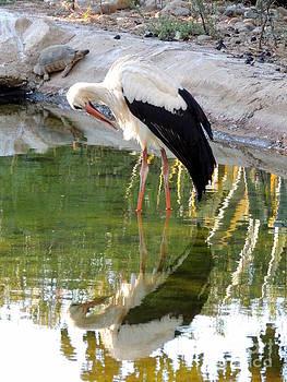 Nature Mirror by Paraskevas Momos