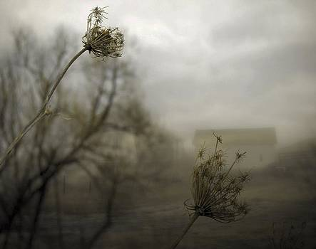 Gothicolors Donna Snyder - Nature Of Fog