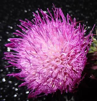 Nature Up close 5 by Faouzi Taleb