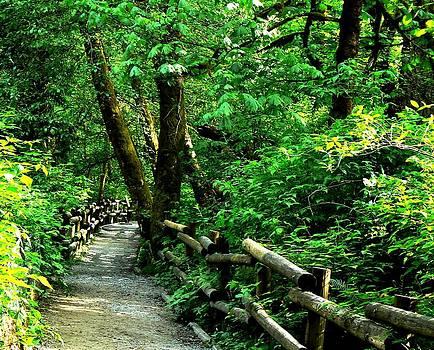 Tia Marie McDermid - Nature Walk