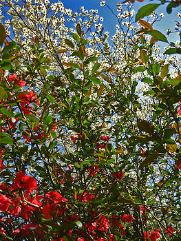 Nature's Beauty by Anita Reynolds