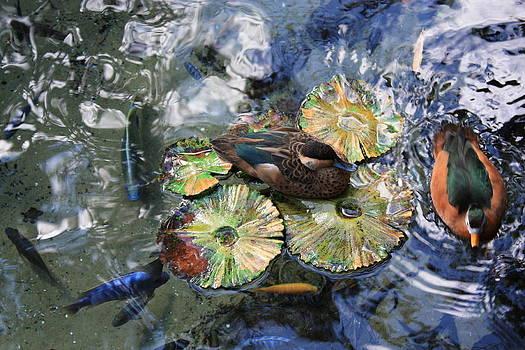 Nature's beauty by Jennifer Ansier