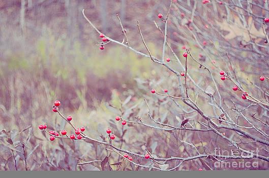 Nature's Bounty by Tiffany Rantanen