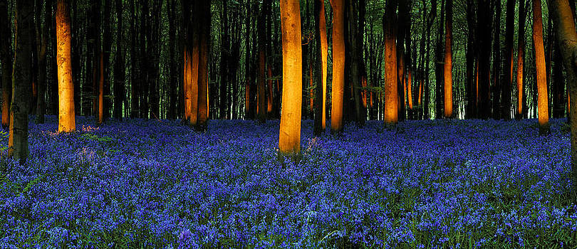Natures carpet  by John Chivers