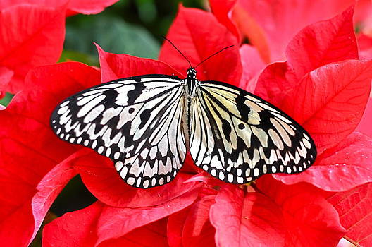 Natures Christmas by Linda Dyer Kennedy