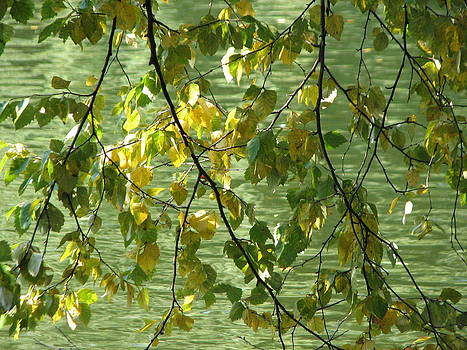 Nature's Curtain by Sue  Thomson