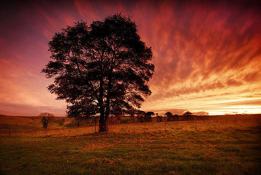 Natures Gift  by John Chivers