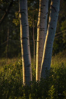 Karol  Livote - Natures Glow