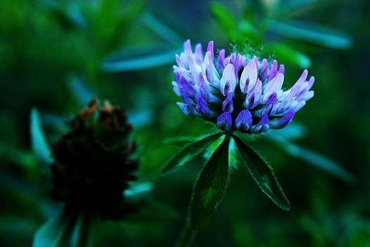 Nature's Own Lighted Flower by Pierre Labrosse