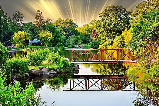 Nature's Reflections by Judy Palkimas