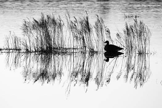 Nature's Silhouette - Goose in North Carolina Wetlands by Bill Swindaman