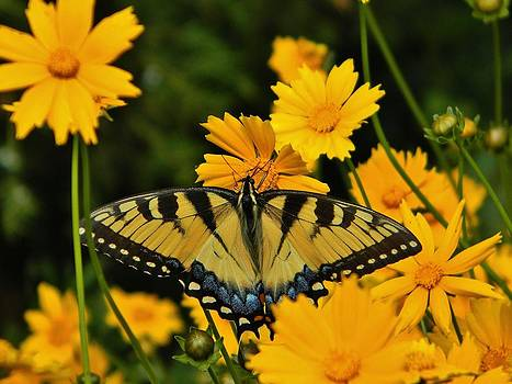 Nature's Symmetry by Jean Goodwin Brooks
