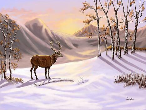 Nature's Winter Beauty by Sena Wilson