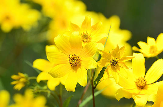 Natures Yellow by Lori Tambakis