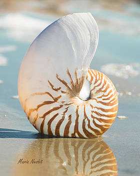 Nautilus by Maria Nesbit