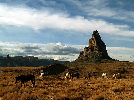 Jeff Brunton - Navajo Horses at El Capitan