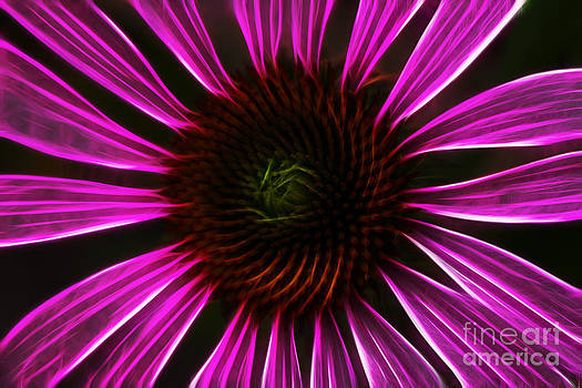 Joann Copeland-Paul - Neon Cornflower