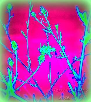 Neon by Terri K Designs