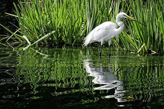 Nesting Egret by Bill Boehm