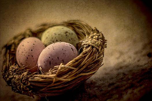 Nesting by Elizabeth Wilson
