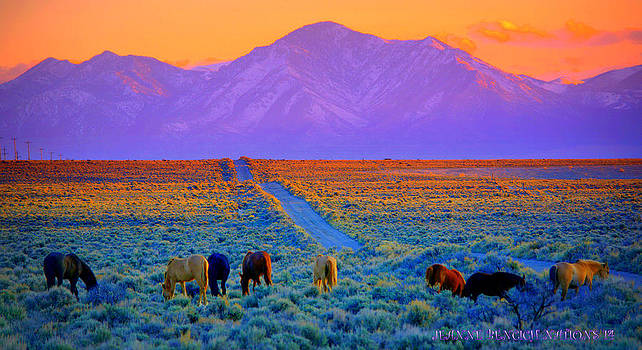 Wild Horse Country  by Jeanne  Bencich-Nations