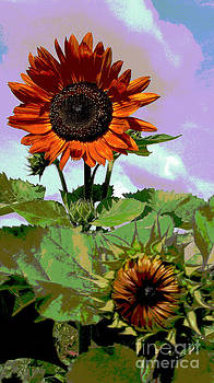 New Sunflowers by Annette Allman