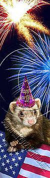 Jeanette K - New Years Ferret # 512