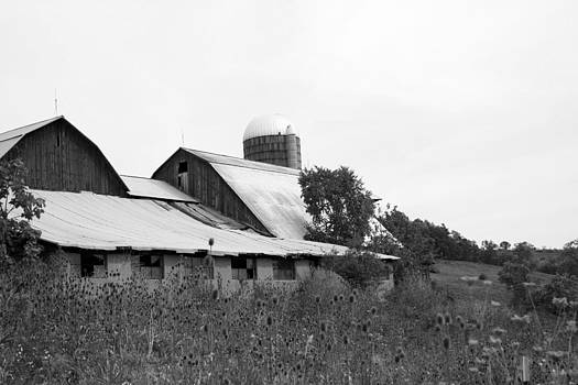New York Farm by Vanessa Reed