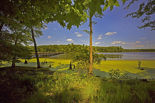 Regina  Williams  - Newport News Park White Oak Trail