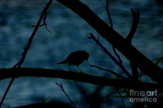 Night Bird by Kim Pate