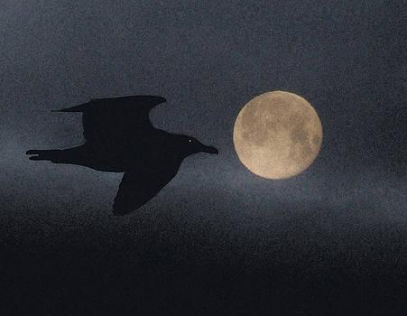 Night Bird by Mark Alan Perry