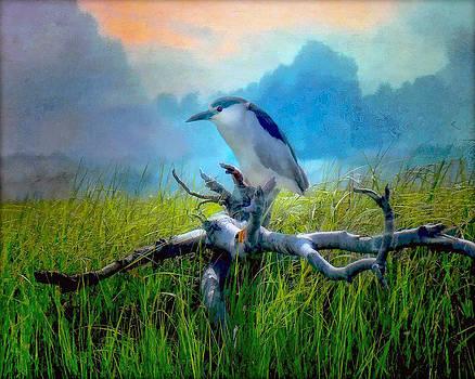 Night Heron by Deborah Mix