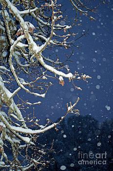 Night Snow by Gwyn Newcombe