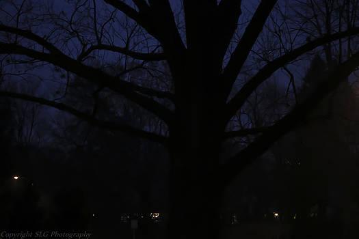 Night by Stacie  Goodloe
