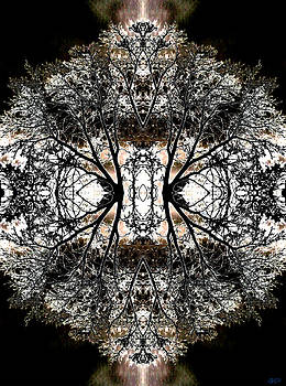 Night - The Rorschach Trees by Jon Lord