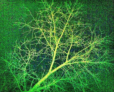 NIGHT TREE small size by Holly Hunt