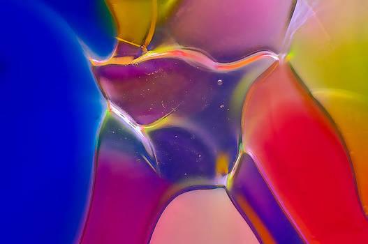 Omaste Witkowski - Noble Colors